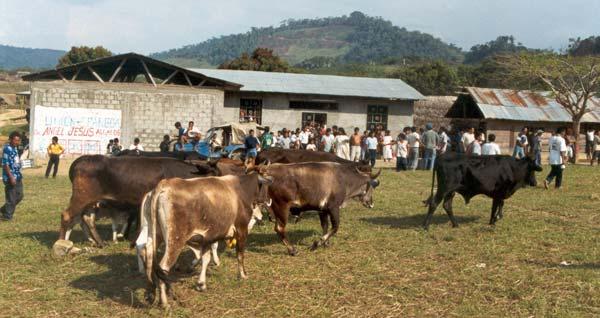 Granja de ganado vacuno